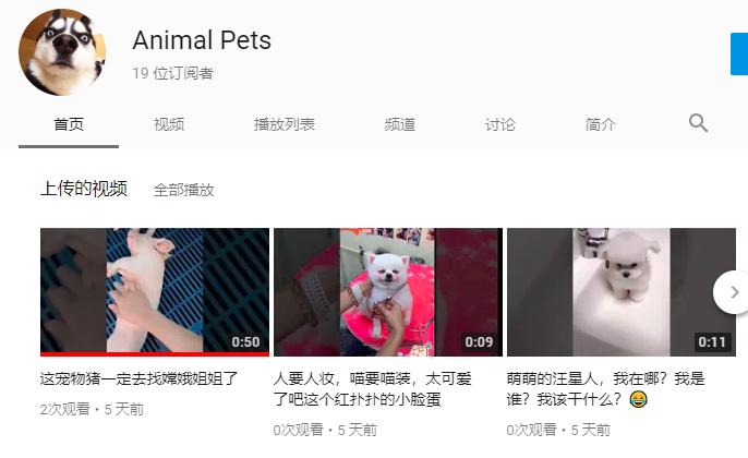 Yotueb 宠物频道 Animal Pets